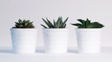 rośliny odpowiedzialne za filtrację wody?